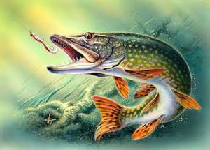 The Pike. The misunderstood prehistoric predator..